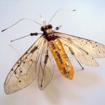 circuit-based-insects-05.jpg