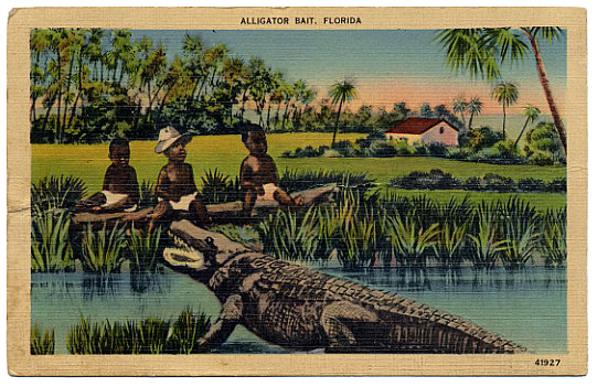 1900_postcard-alligator.png